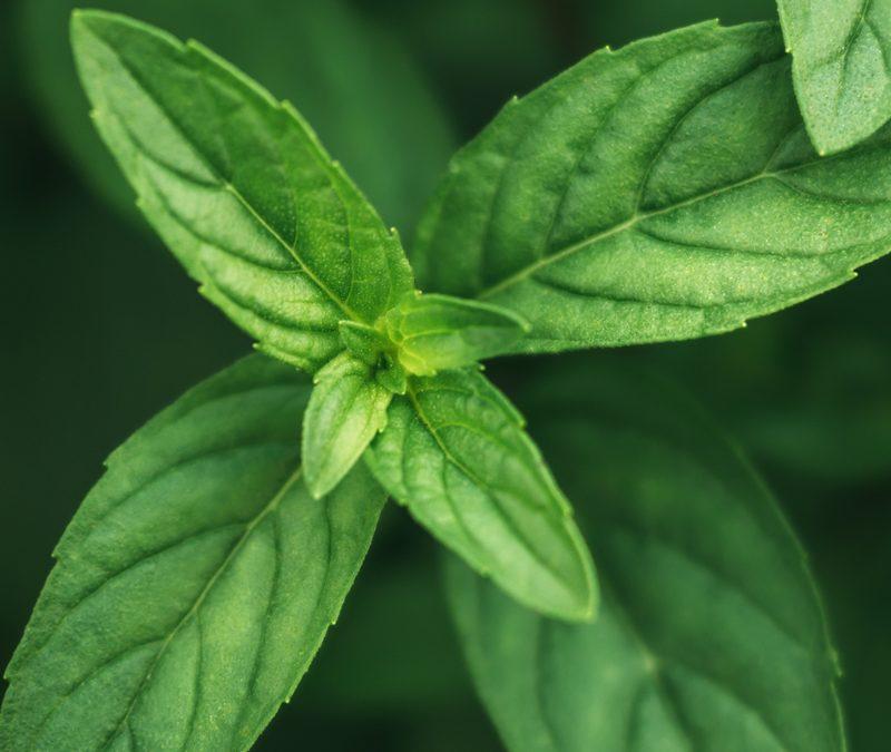Hierbabuena - Pedacito