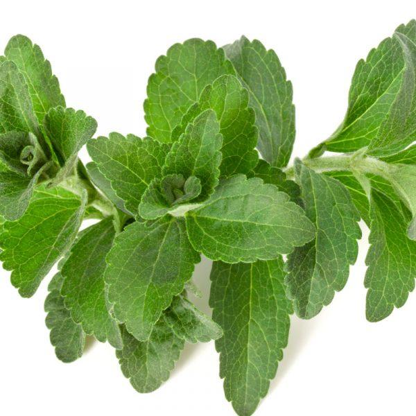 Stevia - Pedacito de Campo